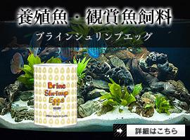 観賞魚飼料(ブラインシュリンプエッグ)